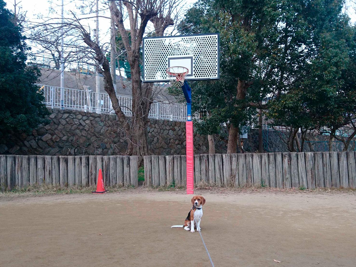 王子スポーツセンター(屋外コート)